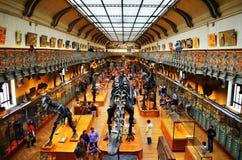Natürliches Museum in Paris Lizenzfreie Stockbilder