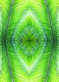 Natürliches Muster gemacht von den Palmblättern Stockbilder