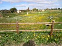 Natürliches parck Gras Stockfotos