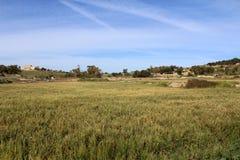 Natürliches Rispengras-Feld Stockbild