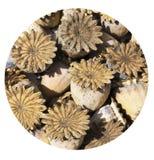 Natürliches textur errichtet von den Trockenblumen Stockfotografie