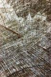 Natürliches verwittertes Grey Tree Stump Cut Texture, große ausführliche alte gealterte Gray Lumber Background Vertical Macro-Nah Lizenzfreie Stockbilder