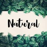 Natürliches Wort mit grünem Blatt freundlich, eco Umwelt, Konzept stockfotografie