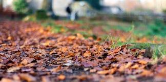 Nat Autumn Leaves royalty-vrije stock foto