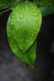 Nat blad met regen Royalty-vrije Stock Afbeeldingen