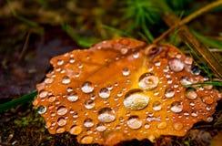Nat de herfstblad stock afbeeldingen