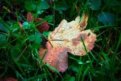 Nat de herfstblad op groen gras Royalty-vrije Stock Afbeeldingen