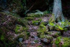 Nat die bos met rotsen en stenen met groen mos, pijnboomboom op de achtergrond worden behandeld stock afbeeldingen