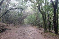 Nat en modderig bos in Anaga, Tenerife SPANJE stock foto's