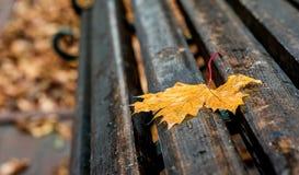 Nat geel esdoornblad op een bank in het park Een regenachtige de herfstdag royalty-vrije stock afbeelding