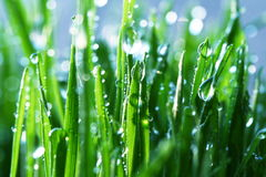Nat gras Stock Afbeelding