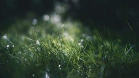 Nat gras diep in het bos royalty-vrije stock fotografie