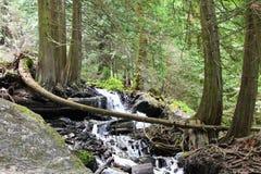 Nat hout in het Regenwoud Royalty-vrije Stock Afbeeldingen