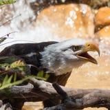 Nat Kaal Eagle openlucht naast een boom en een water op de achtergrond royalty-vrije stock afbeelding