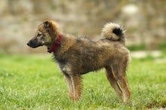 Nat puppy Stock Afbeelding