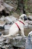 Nat puppy Royalty-vrije Stock Fotografie