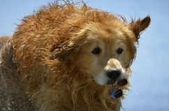 Nat puppy bij het strand Royalty-vrije Stock Foto