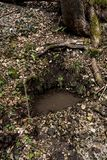 Nat?rliche Untertagequellwasserquelle im wilden Wald lizenzfreie stockbilder