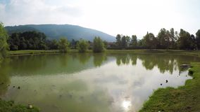Natação aquática da tartaruga em uma lagoa no parque vídeos de arquivo