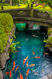 Natação bonita dos peixes do koi no pong em um rio pequeno, lagoa cercada por arbustos verdes no jardim japonês Asakusa Kannon Foto de Stock