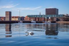 a natação da cisne na água calma próximo amarrou barcos e construções modernas em Copenhaga, Dinamarca Imagens de Stock