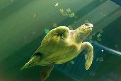 Natação da tartaruga de mar foto de stock