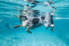 Natação do cão; uma vista de baixo de Imagens de Stock