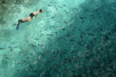 Natação do homem com peixes Fotos de Stock Royalty Free