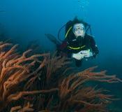 Natação do mergulhador de mergulhador da mulher na água azul desobstruída Imagens de Stock Royalty Free