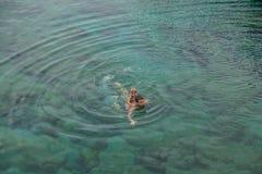 Natação do pai e da filha na piscina natural Charco De La Laja Imagens de Stock Royalty Free