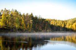 Natação do pato no lago silencioso enevoado foto de stock royalty free