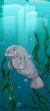 Natação do peixe-boi sob a água ilustração do vetor