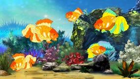 Natação do peixe dourado em um aquário Fotografia de Stock Royalty Free