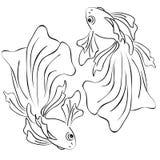 Natação do peixe dourado em um círculo com caudas do voile fotos de stock royalty free