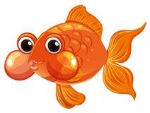 Natação do peixe dourado no fundo branco Foto de Stock Royalty Free