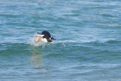 Natação do pinguim no oceano Foto de Stock Royalty Free