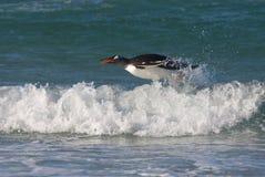 Natação do pinguim no oceano Fotos de Stock Royalty Free