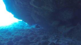 Natação do tubarão em uma caverna Havaí no oceano azul video estoque