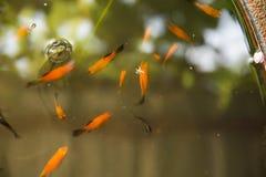 Natação dos peixes do divertimento no dissipador ilustração do vetor