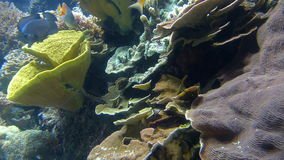 Natação dos peixes do oceano em torno de Coral Reef vídeos de arquivo