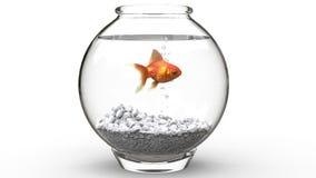 Natação dos peixes do ouro em um fishbowl imagem de stock royalty free