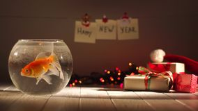 Natação dourada bonita dos peixes no aquário, presentes ao redor, comemorando o ano novo, decorações do feriado video estoque