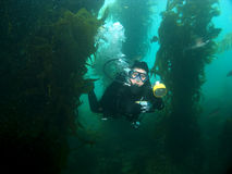 Natação subaquática do fotógrafo através do Kelp Foto de Stock Royalty Free