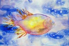 Natación coloreada multi de los pescados de la fantasía en agua azul Imágenes de archivo libres de regalías