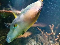 Natación colorida de los pescados con los corales fotografía de archivo libre de regalías