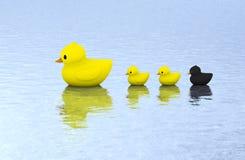 Natación de goma de la familia del pato en el agua Fotografía de archivo libre de regalías