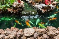 Natación de Koi Carps Fish en la charca en Wat Borom Raja Kanjanapisek W Imagen de archivo libre de regalías