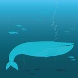 Natación de la ballena Imágenes de archivo libres de regalías