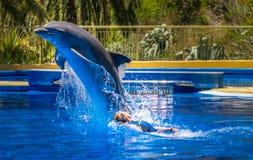 Natación de la mujer con el delfín Imagen de archivo libre de regalías