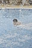 Natación de la mujer en piscina fotografía de archivo